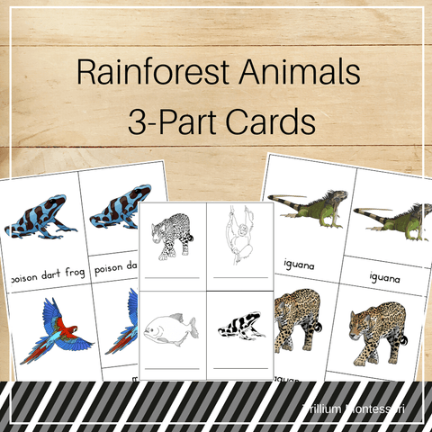 Rainforest Animals 3-Part Cards - Trillium Montessori