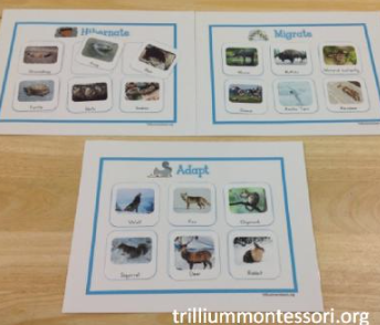 Mini Unit: Animals in Winter - SPANISH - Trillium Montessori