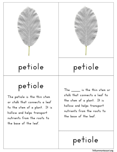 Parts of a Leaf Nomenclature Cards