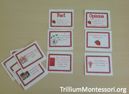 Strawberry Patch Mini Unit - Trillium Montessori