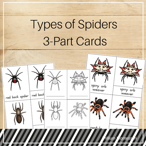 Spiders 3-Part Cards - Trillium Montessori
