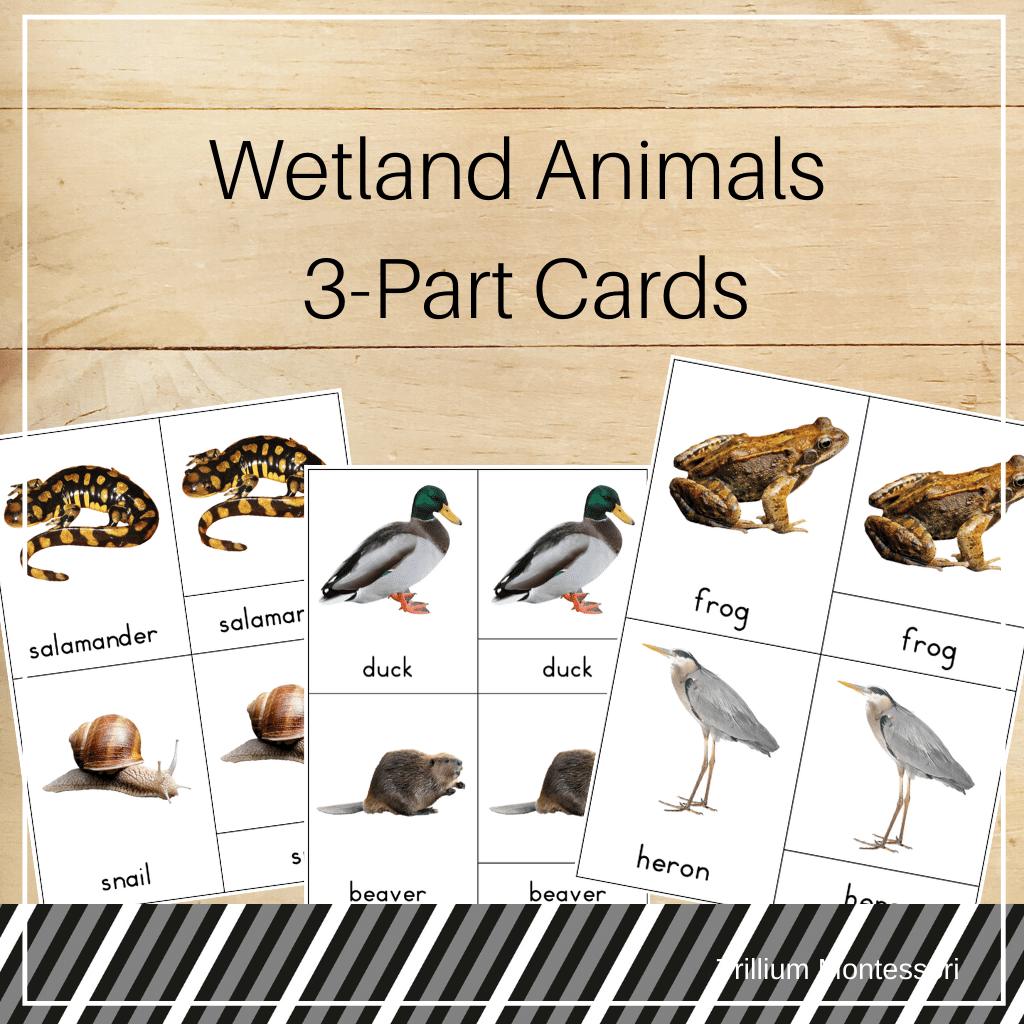 Wetland Animals 3-Part Cards - Trillium Montessori