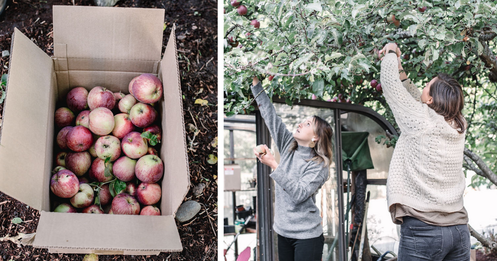Abeego founder picking apples
