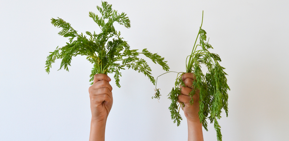 carrot greens wrapped in Abeego versus left naked