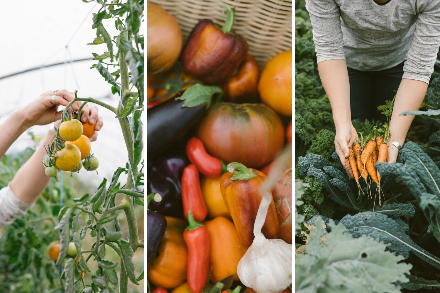 The best way to save freshly picked vegetables is in Abeego beeswax wrap, the choice of gardeners