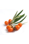 Sea Buckthorn Berry<br /><span>(Hippophae rhamnoides)</span>