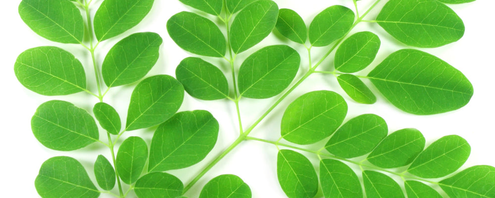 7 More Health Benefits of Moringa: Improve digestion