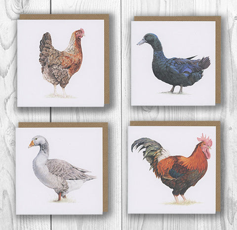 """Feathered Collection"" Notecard Set"