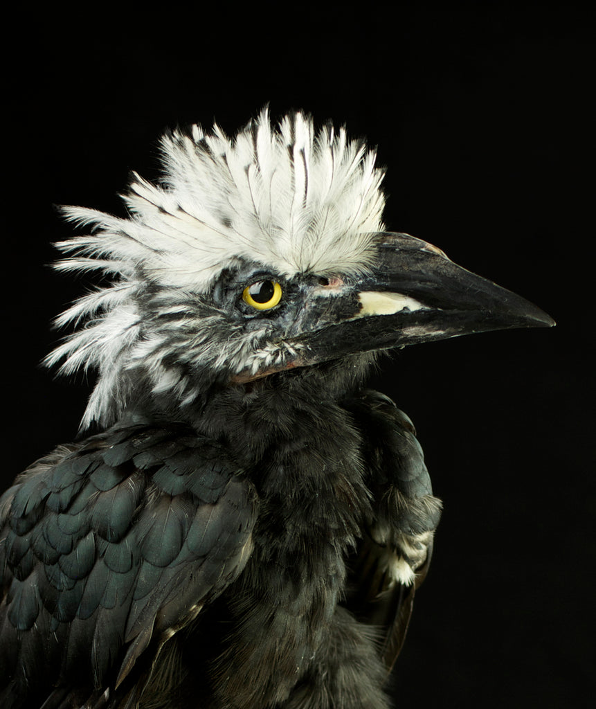 Mounts Toward Infinity: An Exotic Menagerie of Taxidermied Birds