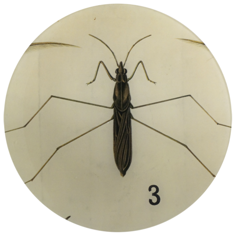 Round Insect Leggy Plate