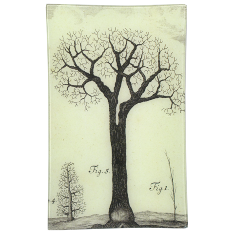 Tree Fig 5 Tray