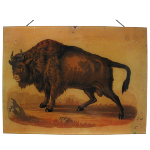 John Derian Wall Hanging Decoupage Bison Plaque