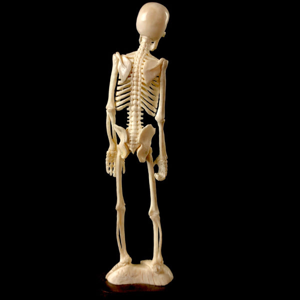 Standing Skeleton Carving