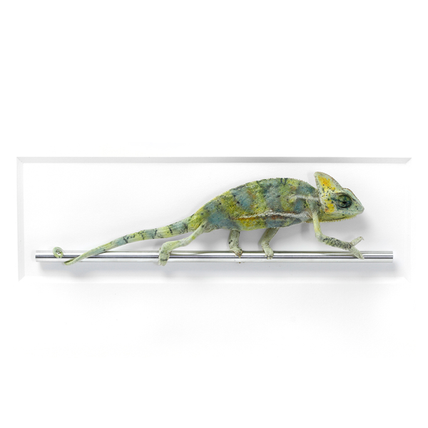 Christopher Marley natural death taxidermy specimen for the modern home