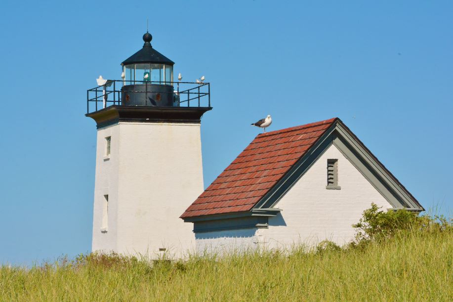 Long Point Light House with Birds by Dan McKeon