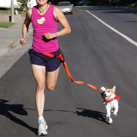Comfortable Hands-Free Running Leash