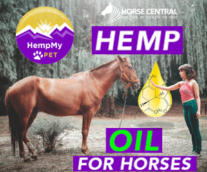 HORSE HEMP OIL FROM USA