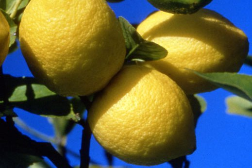 France-Florihana-Organic-Lemon-Essential-Oil