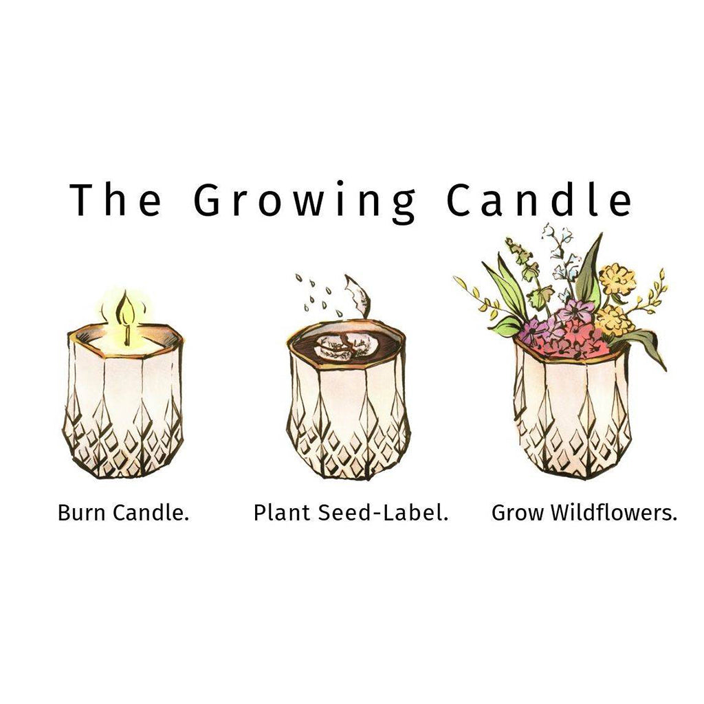 Growing Candle - Clara
