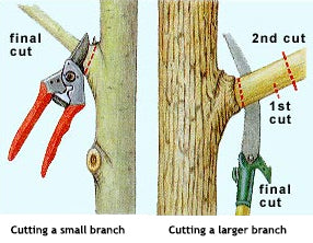 The Best Way to Prune a Branch