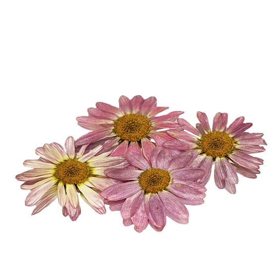 NEW!! Edible Flowers - Pressed Daisy