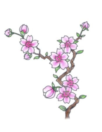 Tattooed Now! Small Cherry Blossom