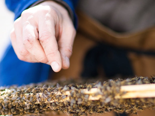 9th of August: Beginner Beekeeping at Sarah Raven's Farm