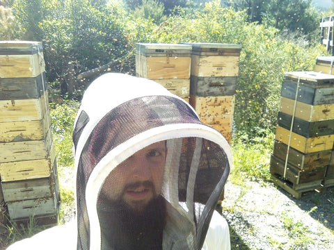 beekeeping new zealand manuka honey bees