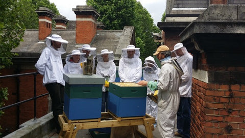The London Honey Company beehive servicing on Tate Britain Roof