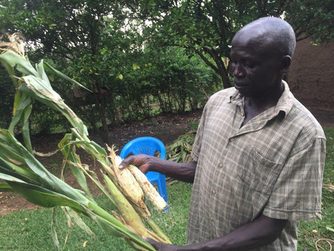 A farmer with a damaged corn crop in Uganda, he is now relying on his honey harvest for income