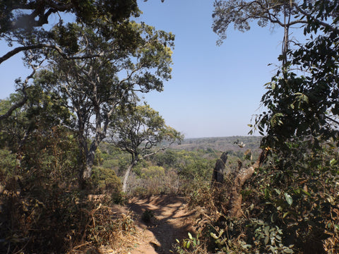Miombo woodland in North West Zambia
