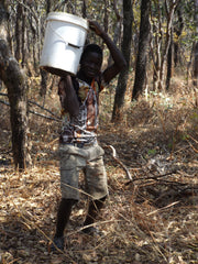 Harvesting Zambian Organic Honey One Bucket at a Time