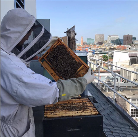 "Jack on the roof of Nobel House checking on Defra's ""black"" bees"