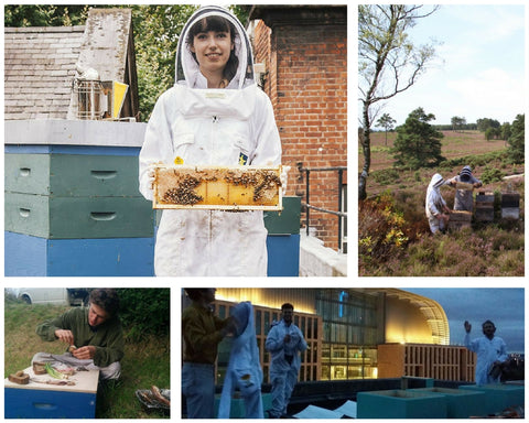 Beekeeping Apprentice Montage the London Honey Company