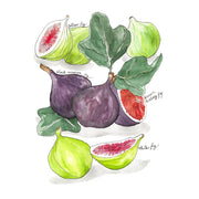 Figs Art Print by Marcella Kriebel