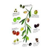 Olives Art Print by Marcella Kriebel