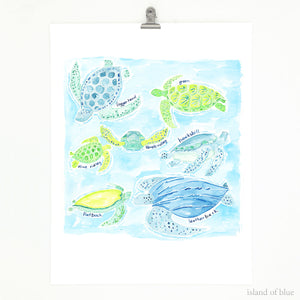 sea turtle art, sea turtles of the world, watercolor and gouache.