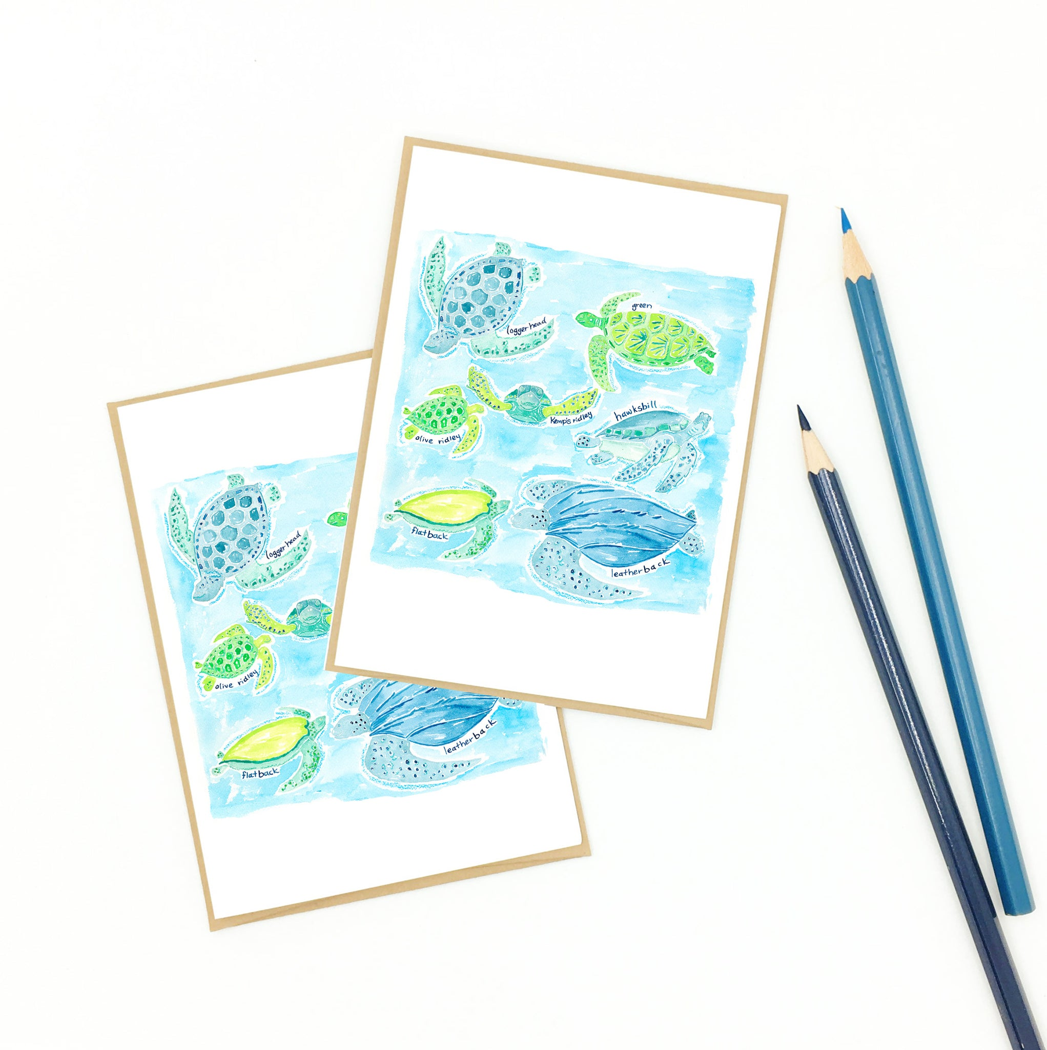 Turtle items, 'Sea Turtles of the World' notecard set.