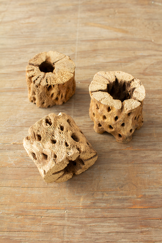 Cholla Wood (Thick Walled)