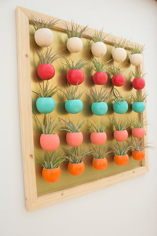 Air Plant Magnets