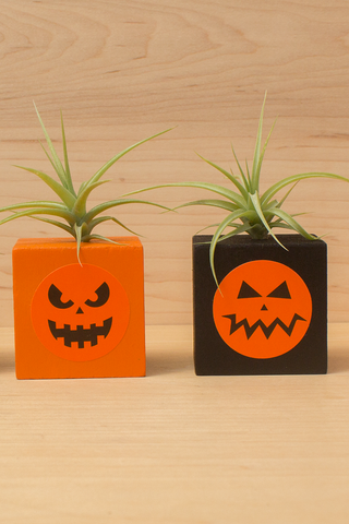 Pumpkin Pot w/Plant