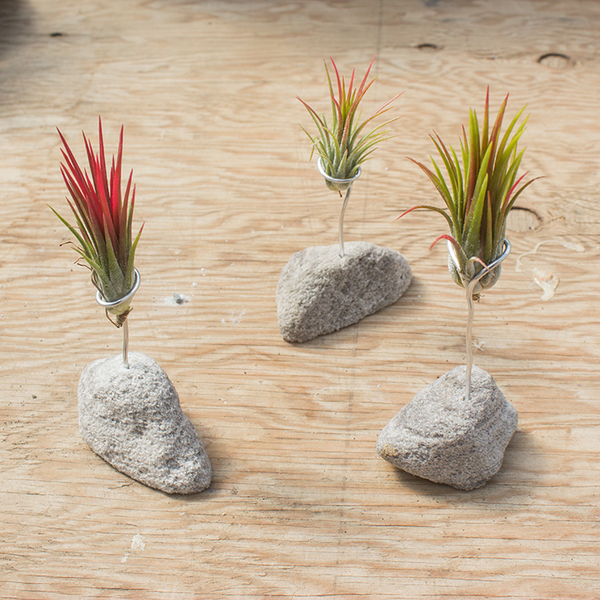 Feather Rock Air Plant Stands