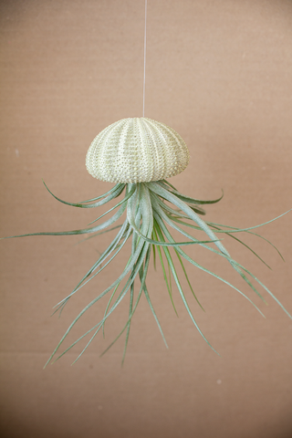 Hanging Green Urchin with Plant (Small)