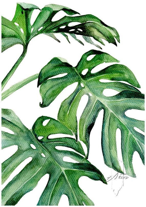 Watercolor Philodendron  - Live-Stream