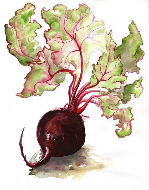 Watercolor Beet - Live-Stream