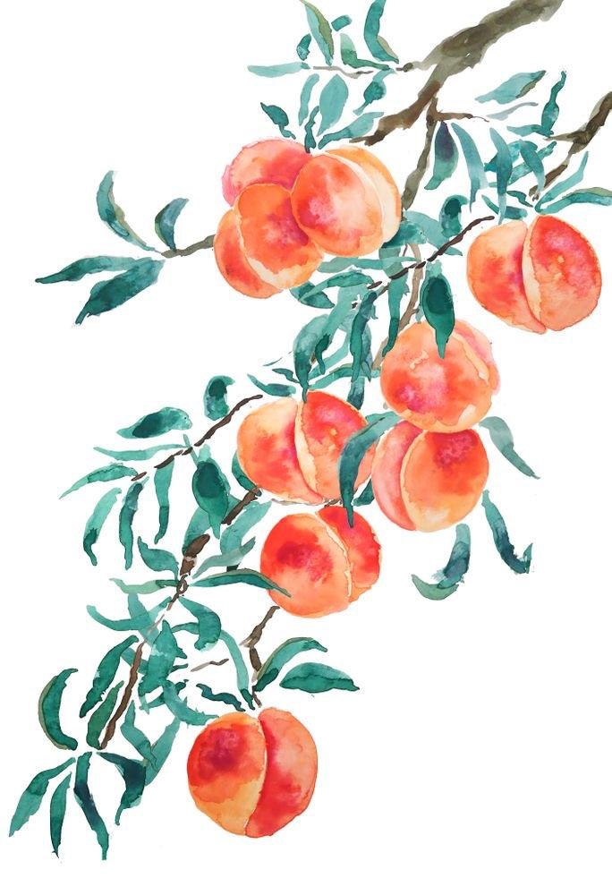 Zoom Watercolor Peaches