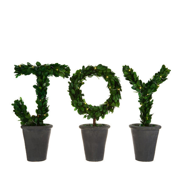 JOY Boxwood