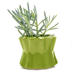 Big Fang Planter - Chive Wholesale