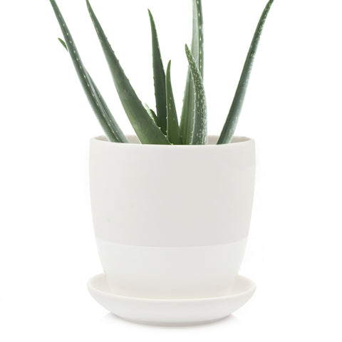 Big Dyad Pot & Saucer - Chive Wholesale