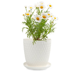 Big Virago Pot & Saucer - Chive Wholesale